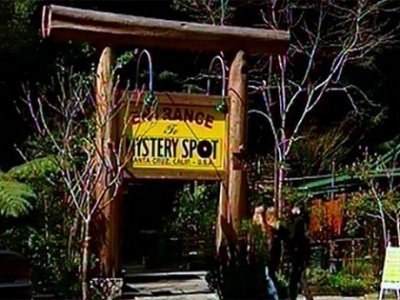 Загадочный лес Калифорнии:  в таинственном лесу не действуют законы физики.